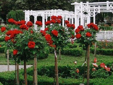 parcul-rozelor-top-10-obiective-